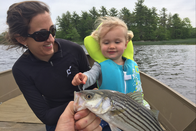 Stripers big (and small) are all the rage in summer on the Kennebec and around Casco Bay. And they provide a great fish for families to target. Photo by: David Sherwood