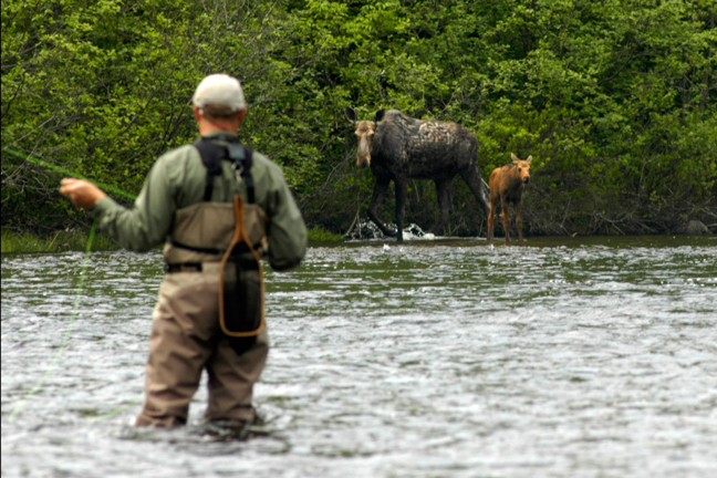 The Moosehead Lake region provides the best opportunity to catch native brook trout and see a moose—sometimes both at the same time. Photo by: David Sherwood