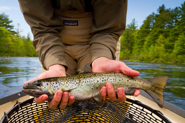 World-class trout fishing abounds in the lakes and rivers around Millinocket, the gateway to Mt. Katahdin. Photo by: David Sherwood