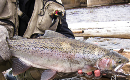 It is one of the most iconic inland fishing experiences in North America