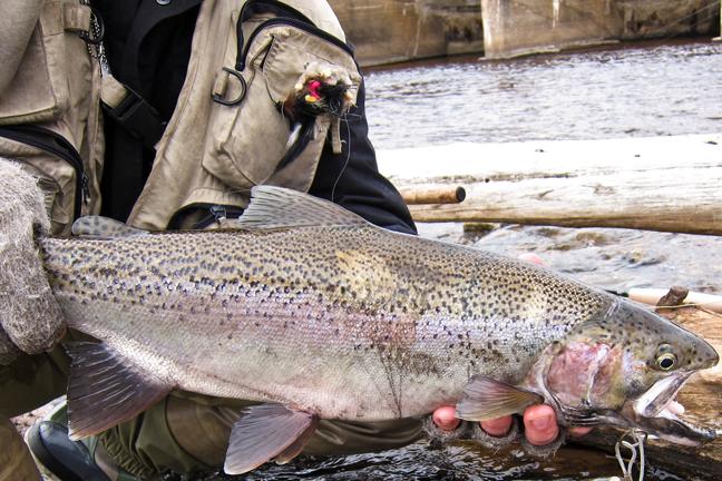 Michigan: Best Rivers for Salmon and Steelhead