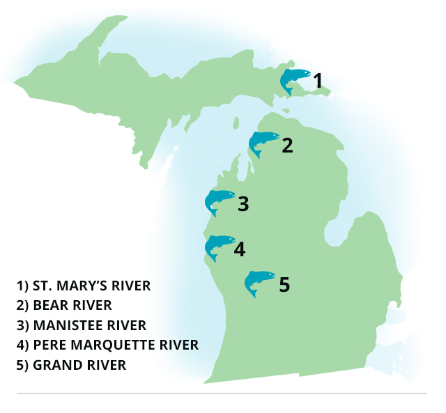 Michigan best rivers for salmon and steelhead game fish for Michigan out of state fishing license