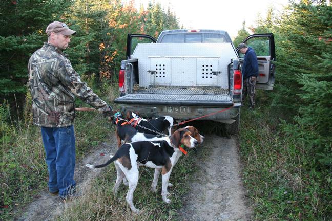 Best Bear Hunting Tips