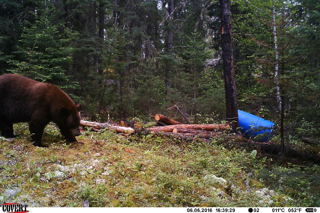 The Best Bear Hunting States