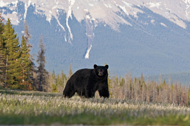 Top Bear Hunting Spots