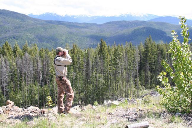 Top Bear Hunting States