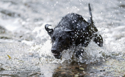 Best Hunting Dog Image