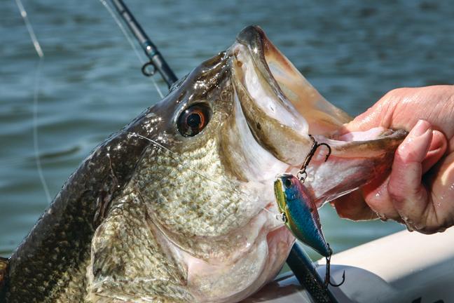 Autumn Bass Lunker