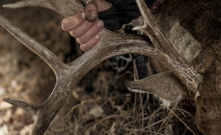 Last season's deer harvest was much higher than the previous season's harvest, but still well below
