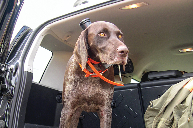 Grouse Hunting GSP
