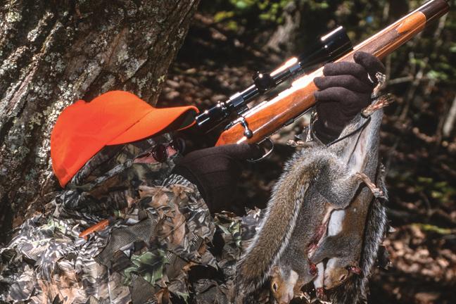 Hunt Squirrels