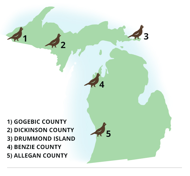 Michigan Best Grouse And Woodcock Hunting In The State