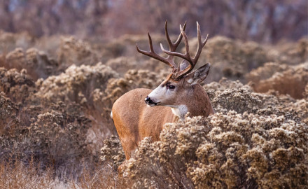 Each fall, deer hunters heed the call to Colorado's wilderness in pursuit of a trophy buck or