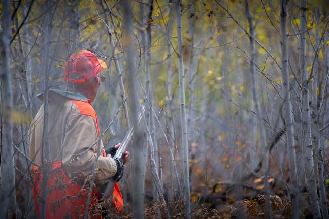Michigan: Best Grouse and Woodcock Hunting In the State