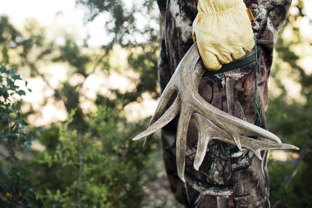 High Country Deer