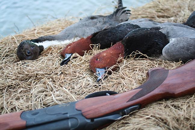 Savvy Ducks