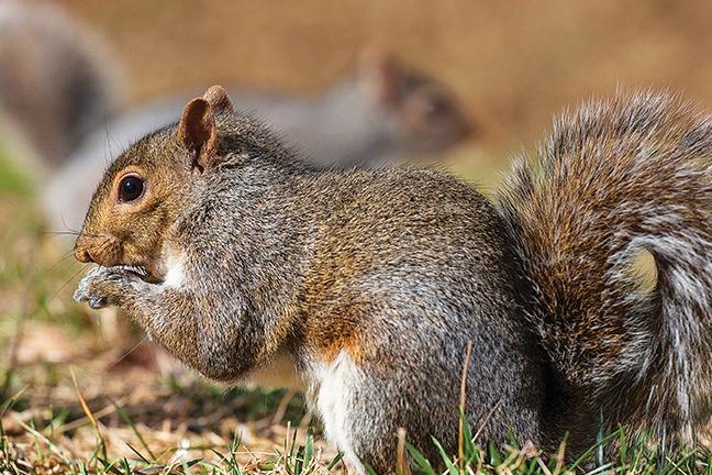Squirrel Hunt Surprise