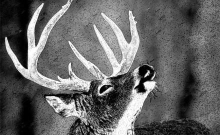 Saving Whitetail Deer