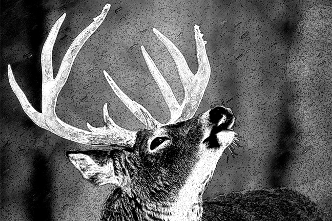 How We Saved Whitetails