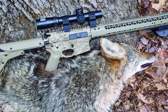 Suburbia Coyote