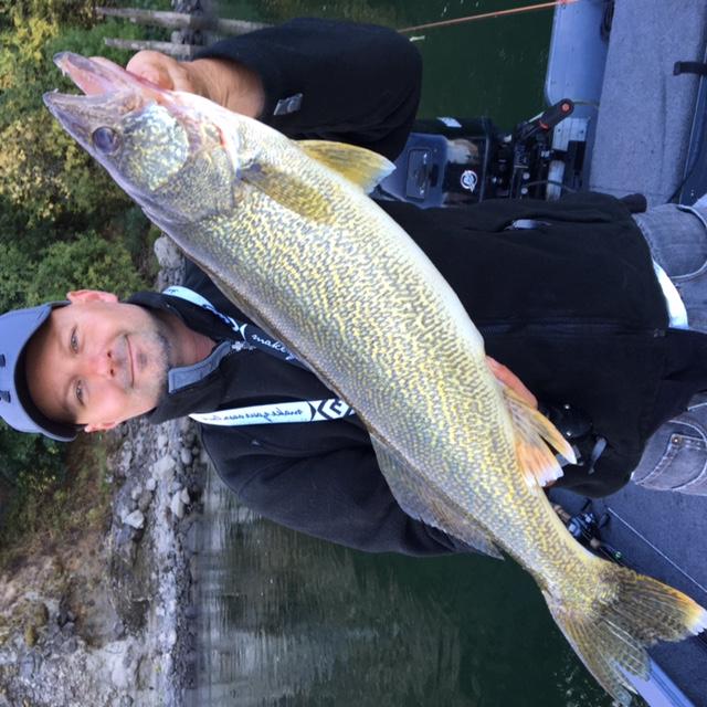 Walleye game fish for Walleye fishing columbia river