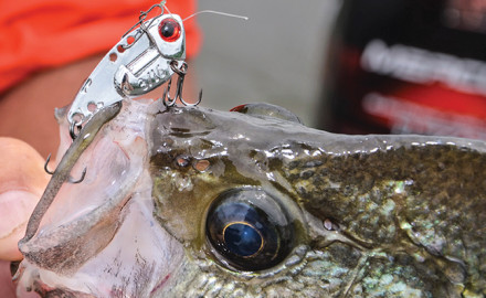 Bass Tactics For Crappie