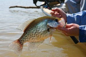 Great Plains crappie fishing