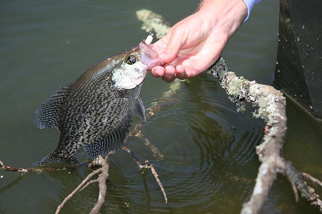Georgia Crappie Fishing Forecast Spring 2017