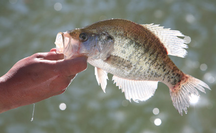 GA Fishing Forecast Feature