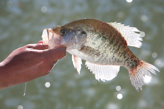 2017 Georgia Fishing Forecast