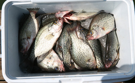 Great Plains crappie fishing is expected to be good this year, with reports indicating strong