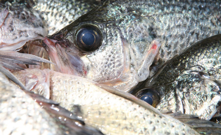 Iowa crappie fishing