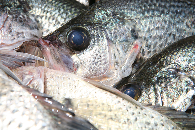 Freshwater fishing on flipboard for Best crappie fishing times