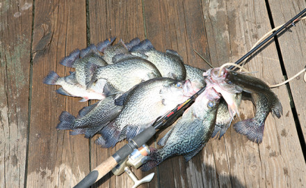 Illinois crappie fishing