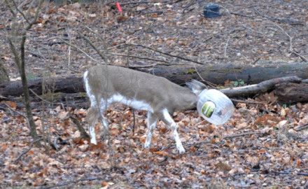 'Jughead' deer has had a large plastic snack jar stuck on head.