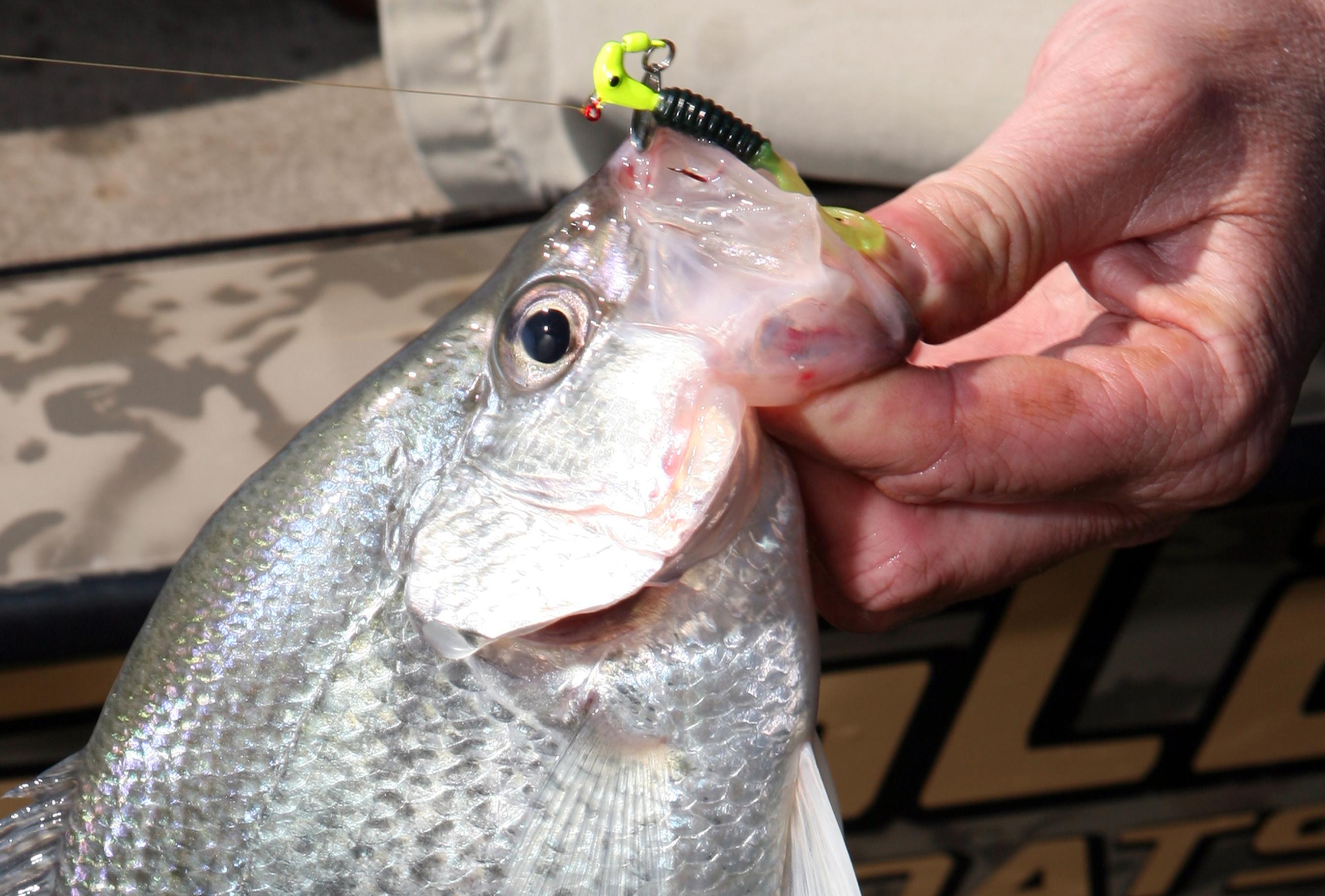 2017 Kentucky Fishing Forecast