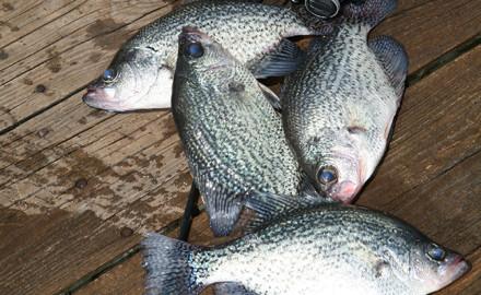 Michigan crappie fishing