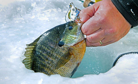 When the majority of Minnesota anglers travel during the winter months to go ice fishing, it is for