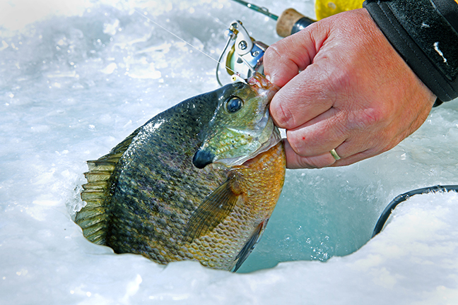 Overlooked ice fishing gems in minnesota game fish for Ice fishing minnesota