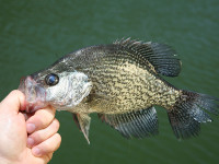 Missouri crappie fishing
