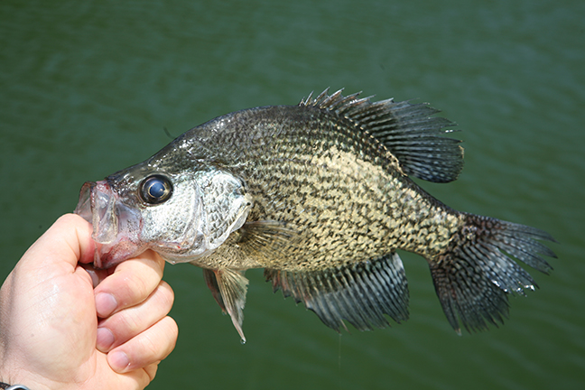 missouri crappie fishing forecast spring 2017 game fish
