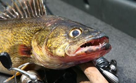 NY Fishing Forecast Feature