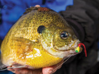 Ice Fishing Tips for Panfish