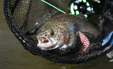 Rocky Mountains Fishing Forecast Feature