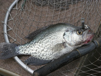 South Carolina crappie fishing