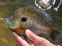 VA Fishing Forecast Feature