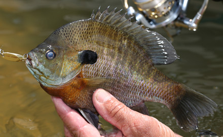 Saltwater, freshwater, big water, small streams: Virginia's got some top angling for any taste.