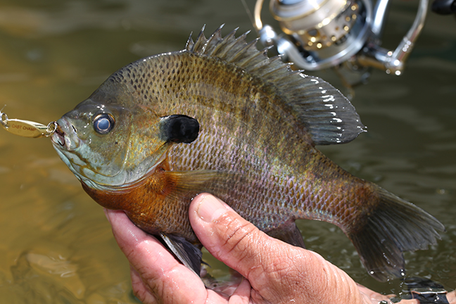 2017 Virginia Fishing Forecast
