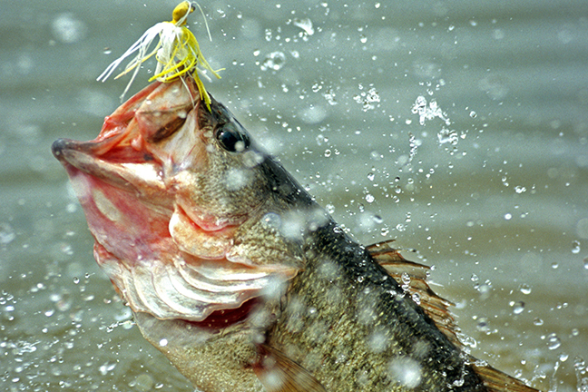 WO Fishing Forecast Feautre