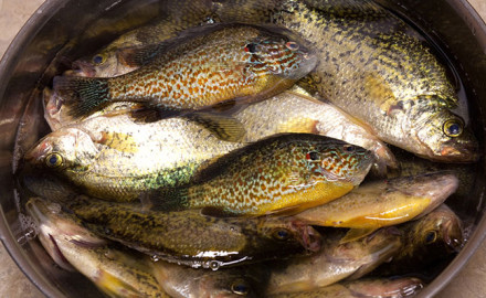 Top posts: A Wisconsin man is facing more than $24,000 in fines as a result of charges stemming from being caught in possession of more than 2,500 panfish.